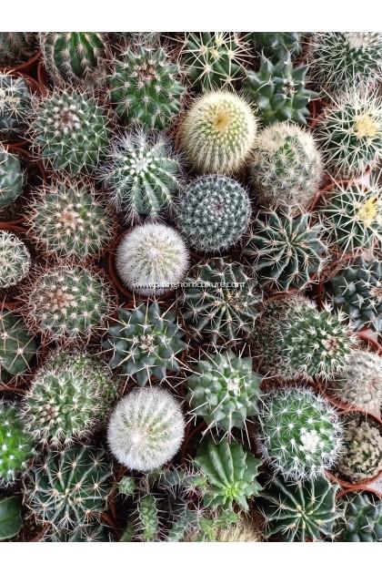 Cactus Random Selection
