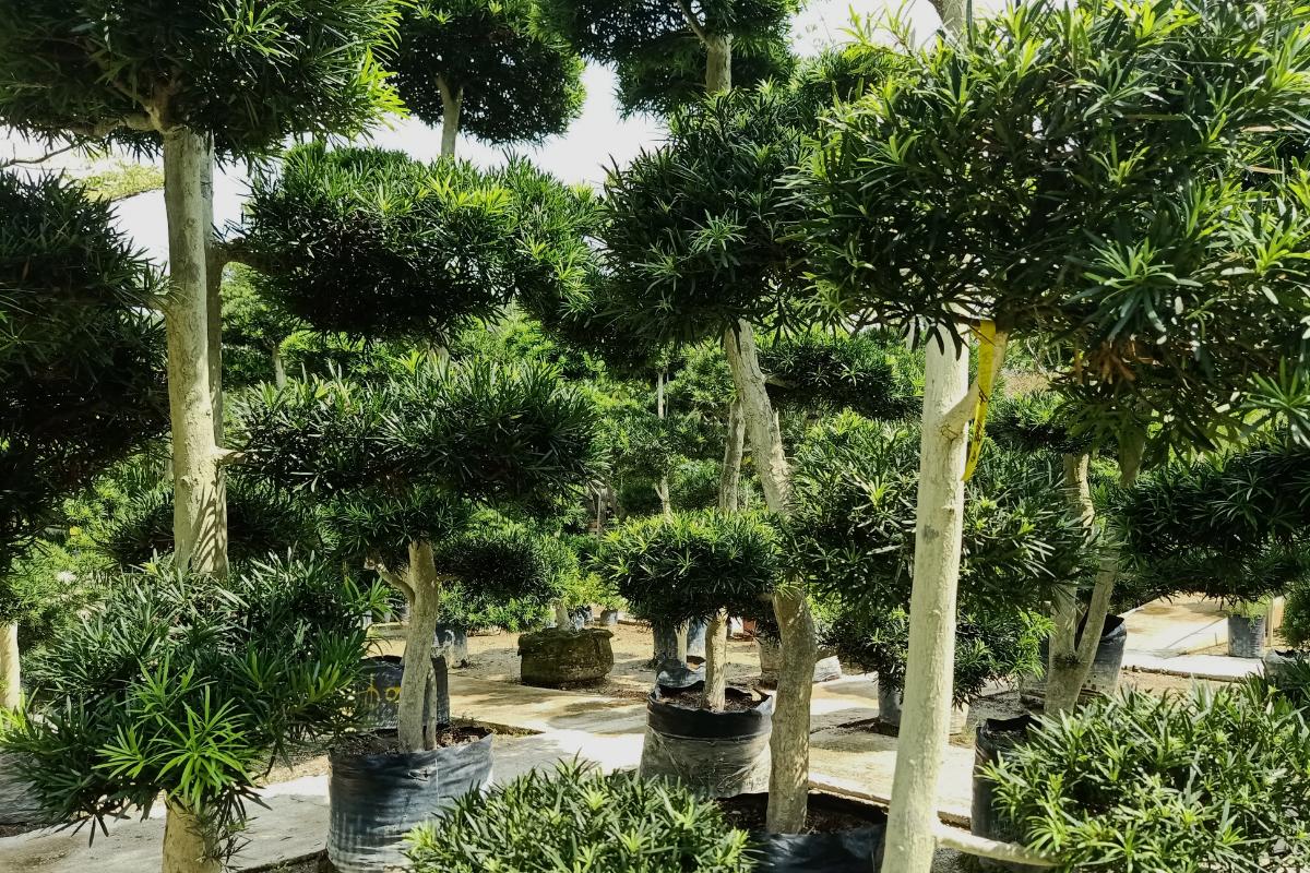 Build Your Bonsai Garden